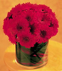 Van ucuz çiçek gönder  23 adet gerbera çiçegi sade ve sik cam içerisinde