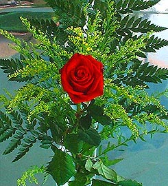 1 adet kirmizi gül buketi   Van çiçek siparişi vermek