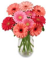 vazo içerisinde 13 adet gerbera çiçeği  Van çiçek siparişi sitesi