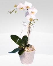 1 dallı orkide saksı çiçeği  Van online çiçekçi , çiçek siparişi