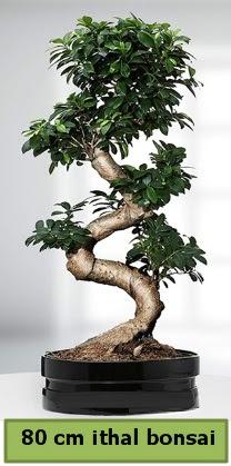 80 cm özel saksıda bonsai bitkisi  Van çiçekçi telefonları