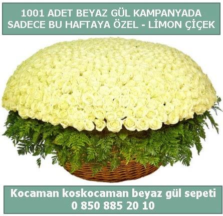 1001 adet beyaz gül sepeti özel kampanyada  Van çiçek gönderme sitemiz güvenlidir