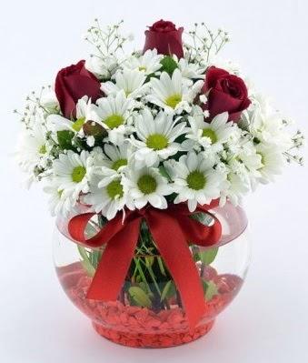 Fanusta 3 Gül ve Papatya  Van internetten çiçek satışı