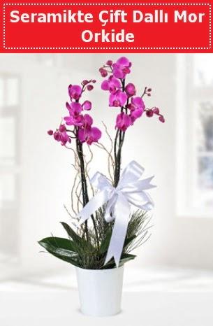 Seramikte Çift Dallı Mor Orkide  Van anneler günü çiçek yolla