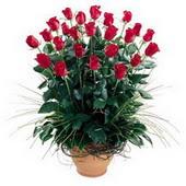 Van uluslararası çiçek gönderme  10 adet kirmizi gül cam yada mika vazo