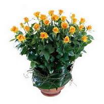 Van cicekciler , cicek siparisi  10 adet sari gül tanzim cam yada mika vazoda çiçek