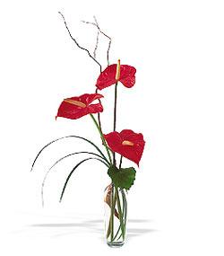 Van çiçek siparişi sitesi  cam yada mika Vazoda 3 adet  antoryum