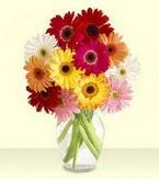 Van çiçek yolla , çiçek gönder , çiçekçi   cam yada mika vazoda 15 özel gerbera