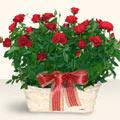 Van İnternetten çiçek siparişi  11 adet kirmizi gül sepette