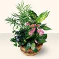 Van çiçek satışı  5 adet canli çiçek sepette
