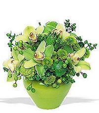 cam yada mika vazoda 5 adet orkide   Van online çiçekçi , çiçek siparişi