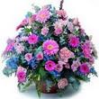 karisik mevsim kir çiçekleri  Van çiçek gönderme sitemiz güvenlidir