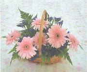gerbera çiçeklerinde sepet   Van çiçek yolla