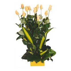 12 adet beyaz gül aranjmani  Van kaliteli taze ve ucuz çiçekler