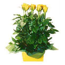 11 adet sari gül aranjmani  Van online çiçekçi , çiçek siparişi