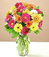 Van çiçek online çiçek siparişi  17 adet karisik gerbera