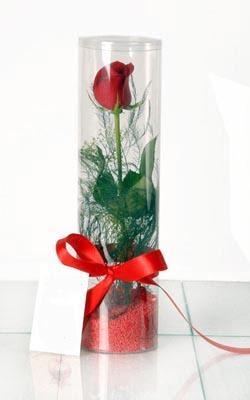 Van çiçek yolla  Silindir vazoda tek kirmizi gül