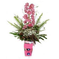 Van hediye çiçek yolla  cam yada mika vazo içerisinde tek dal orkide çiçegi