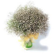 Van çiçek mağazası , çiçekçi adresleri  cam yada mika vazo içerisinde cipsofilya demeti