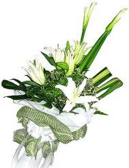 Van güvenli kaliteli hızlı çiçek  3 dal kazablanka çiçegi ve yesillikler