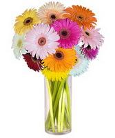 Van internetten çiçek siparişi  Farkli renklerde 15 adet gerbera çiçegi