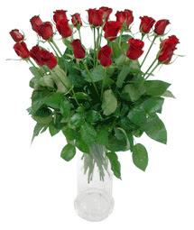 Van çiçekçi telefonları  11 adet kimizi gülün ihtisami cam yada mika vazo modeli