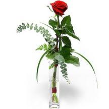 Van 14 şubat sevgililer günü çiçek  Sana deger veriyorum bir adet gül cam yada mika vazoda