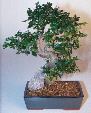 Van çiçek gönderme sitemiz güvenlidir  ithal bonsai saksi çiçegi  Van çiçek siparişi sitesi