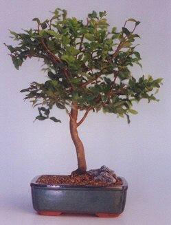 Van ucuz çiçek gönder  ithal bonsai saksi çiçegi  Van anneler günü çiçek yolla