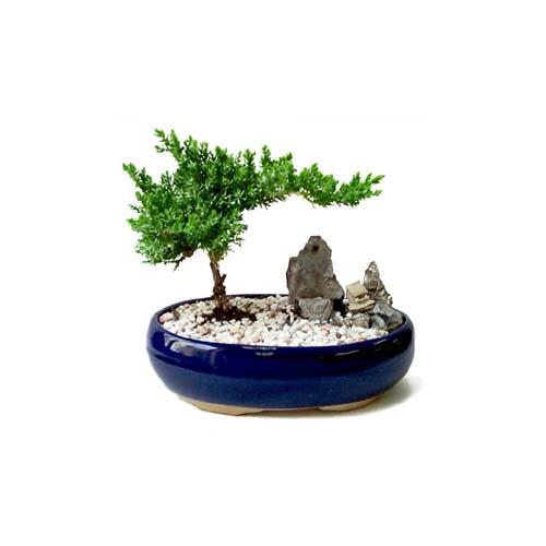 ithal bonsai saksi çiçegi  Van çiçek gönderme