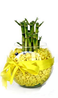 cam fanus içerisinde bambo  Van internetten çiçek satışı