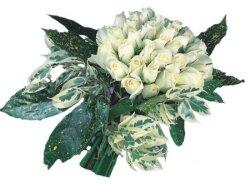 Van internetten çiçek siparişi  9 Beyaz gül Özel kisiler için