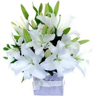Van çiçek yolla  2 dal cazablanca vazo çiçeği