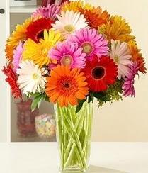Van çiçek servisi , çiçekçi adresleri  15 adet gerbera çiçek vazosu