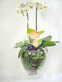Van çiçek satışı  Cam yada mika vazoda özel orkideler