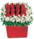 Van çiçek gönderme  Kare cam yada mika içinde kirmizi güller - anneler günü seçimi özel çiçek