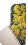 Van çiçek gönderme  Kutu içerisine dal cymbidium orkide