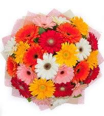 15 adet renkli gerbera buketi  Van yurtiçi ve yurtdışı çiçek siparişi