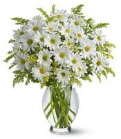 Vazo içerisinde beyaz krizantem çiçekleri  Van çiçekçi mağazası