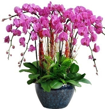 9 dallı mor orkide  Van 14 şubat sevgililer günü çiçek