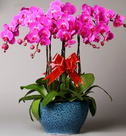 7 dallı mor orkide  Van çiçek online çiçek siparişi