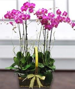 4 dallı mor orkide  Van güvenli kaliteli hızlı çiçek