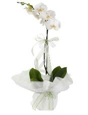 1 dal beyaz orkide çiçeği  Van çiçek siparişi vermek