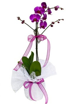 Tek dallı mor orkide  Van çiçekçi telefonları