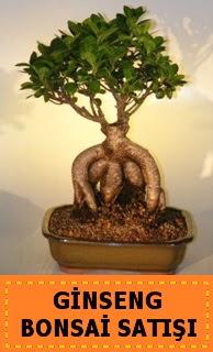 Ginseng bonsai satışı japon ağacı  Van cicek , cicekci