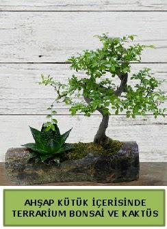 Ahşap kütük bonsai kaktüs teraryum  Van internetten çiçek siparişi