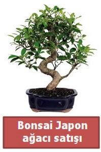 Japon ağacı bonsai satışı  Van çiçek siparişi sitesi