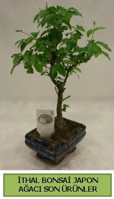 İthal bonsai japon ağacı bitkisi  Van hediye sevgilime hediye çiçek