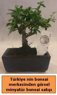Japon ağacı bonsai satışı ithal görsel  Van çiçek yolla