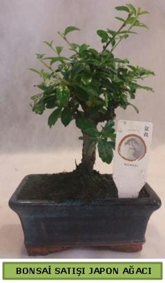 Minyatür bonsai ağacı satışı  Van çiçek gönderme